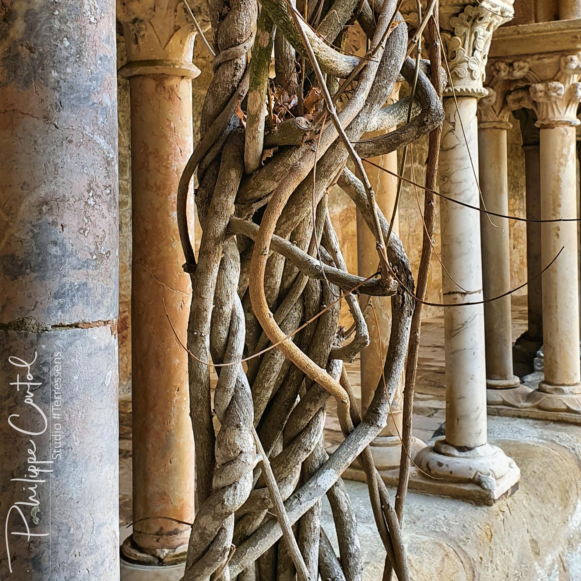 Cloître de l'abbaye de Fontfroide, Aude, Occitanie, France (photographie : Philippe Contal, studio #Terressens)